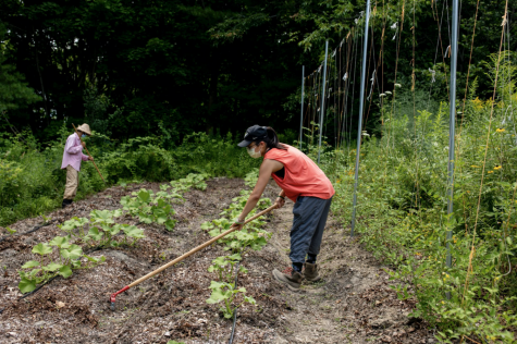 Hermione Zhou ('21) works in the Bates Garden alongside Tom Twist (Sustainability Manager at Bates College).