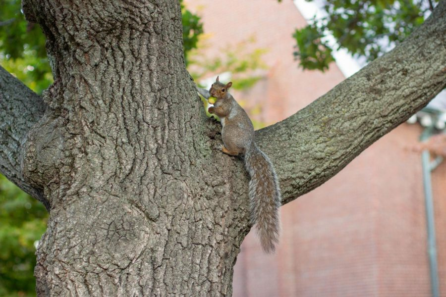 """Spotted: Squirrel filming a """"what I eat in a day"""" TikTok."""
