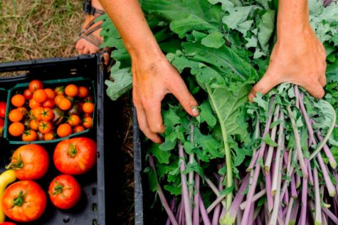 Commons seeks to support the local food system through sourcing from local producers and supporting campus sustainability initatives such as the Bates Garden and Pollinaotr Project.